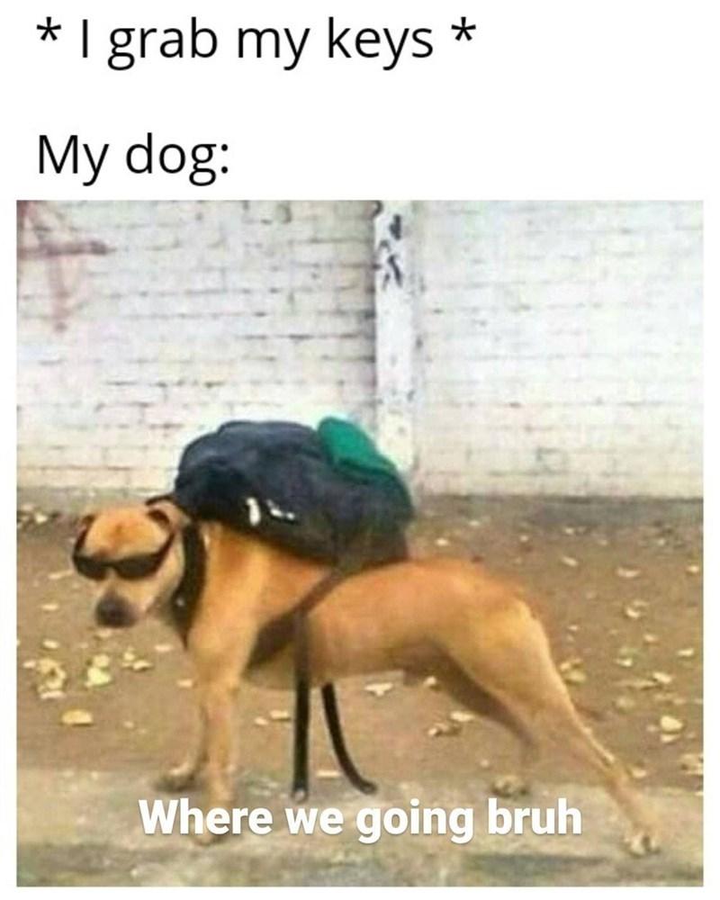 Dog - * I grab my keys * My dog: Where we going bruh