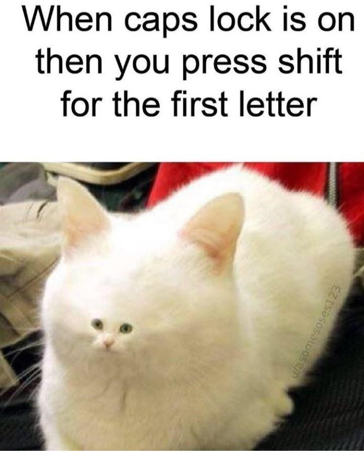 Cat - When caps lock is on then you press shift for the first letter ufasomesoses123