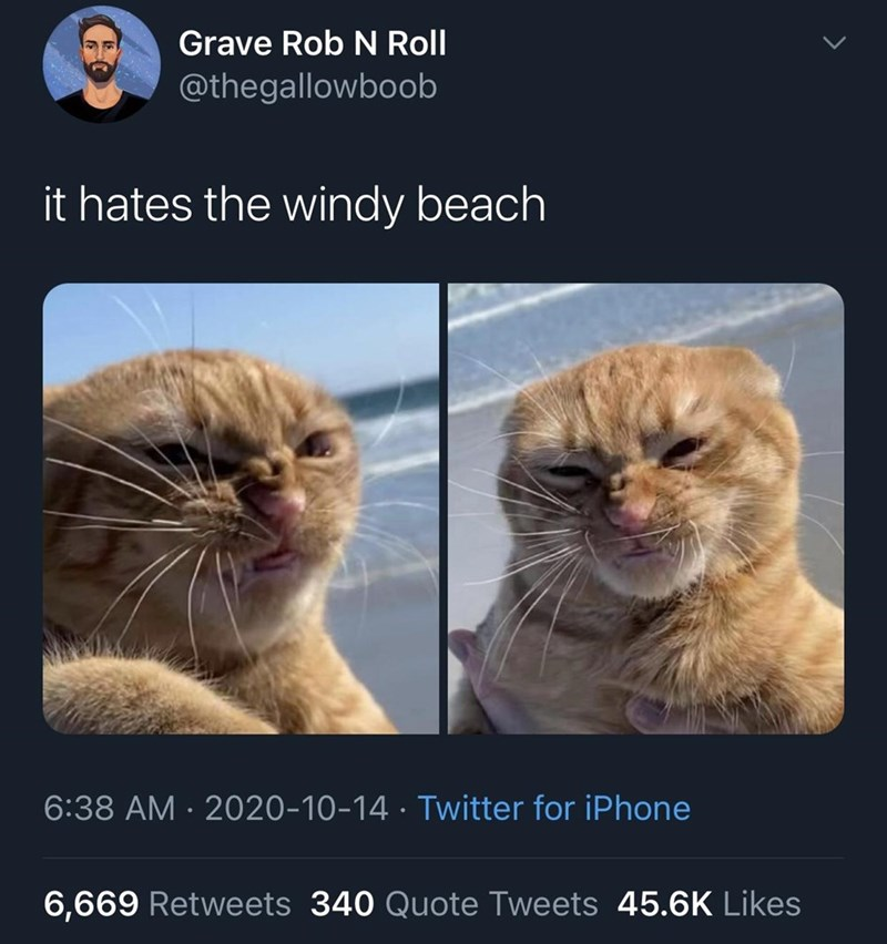 Cat - Grave Rob N Roll @thegallowboob it hates the windy beach 6:38 AM · 2020-10-14 · Twitter for iPhone 6,669 Retweets 340 Quote Tweets 45.6K Likes