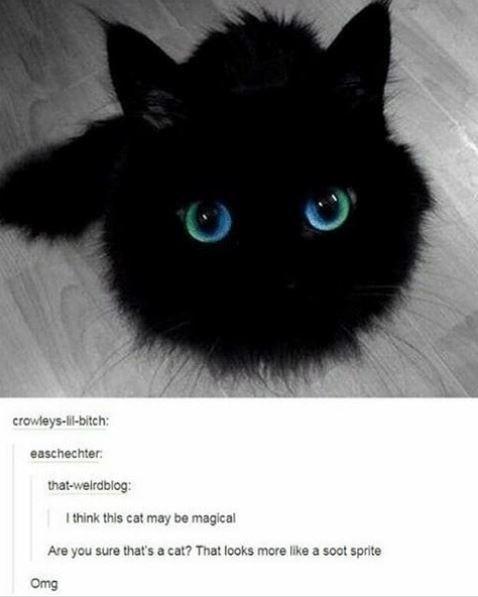 Cat - crowleys-lil-bitch: easchechter: that-weirdblog: I think this cat may be magical Are you sure that's a cat? That looks more like a soot sprite Omg