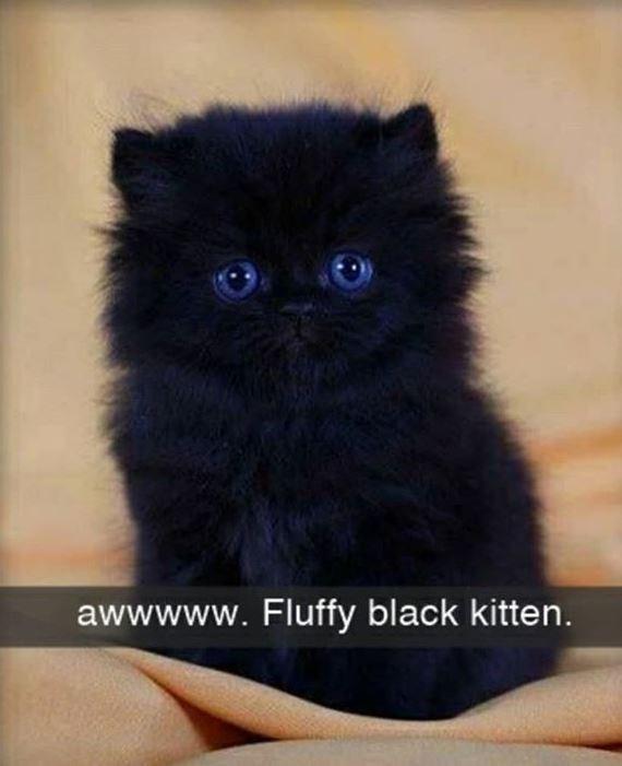 Cat - awwwww. Fluffy black kitten.