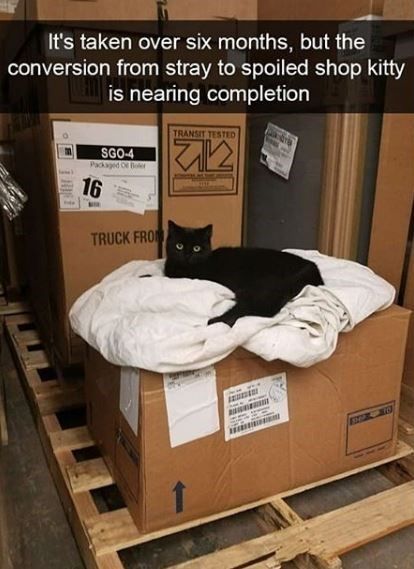 Furniture - It's taken over six months, but the conversion from stray to spoiled shop kitty is nearing completion TRANSIT TESTED SGO-4 Packaged o er E 16 TRUCK FRO