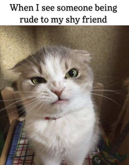 When I see someone being rude to my shy friend funny cat making an angry face