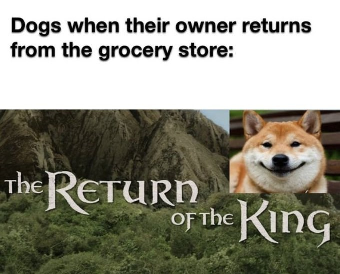 Dogs when their owner returns from the grocery store: Lord of the rings The return of the king