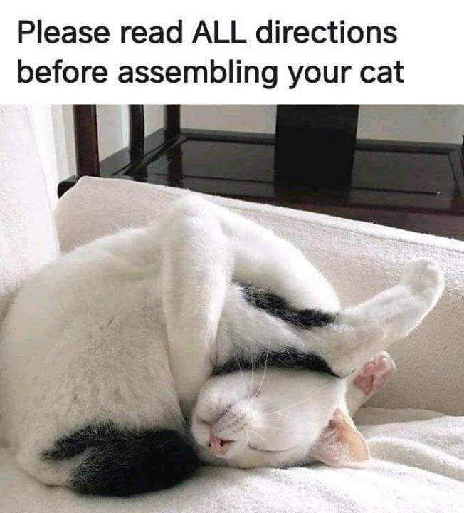 Please read ALL directions before assembling your cat funny cat sleeping all twisted up