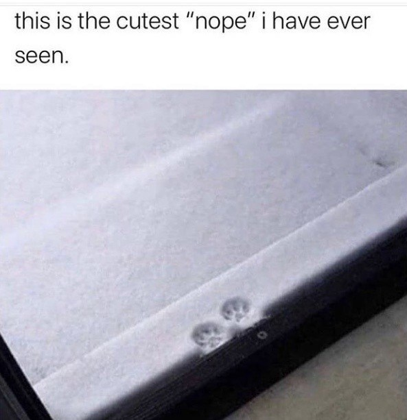 this is the cutest nope i have ever seen. two single cat footprints paw prints in snow