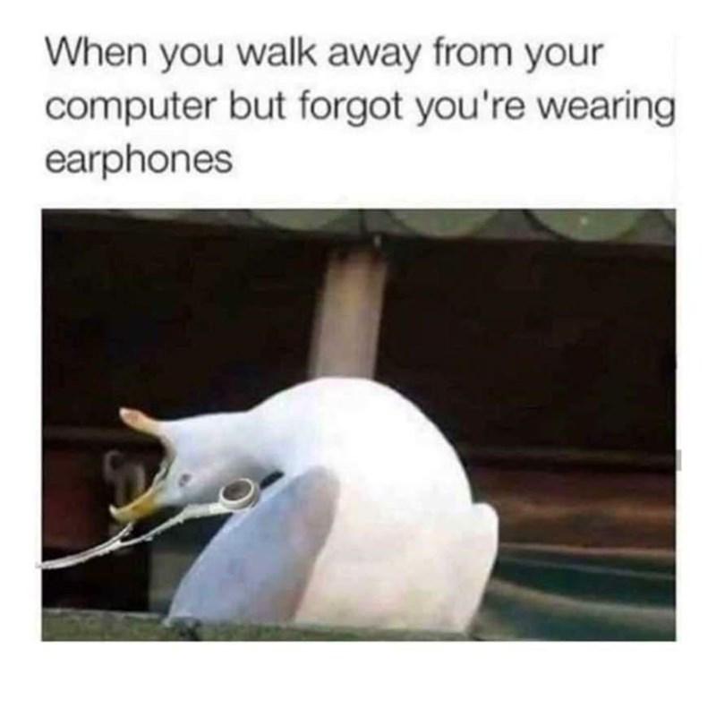 Bird - When you walk away from your computer but forgot you're wearing earphones