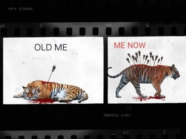 Bengal tiger - 9909 CT0&NI 8A 9A ME NOW OLD ME UNPOLD 6066 2 2A JA