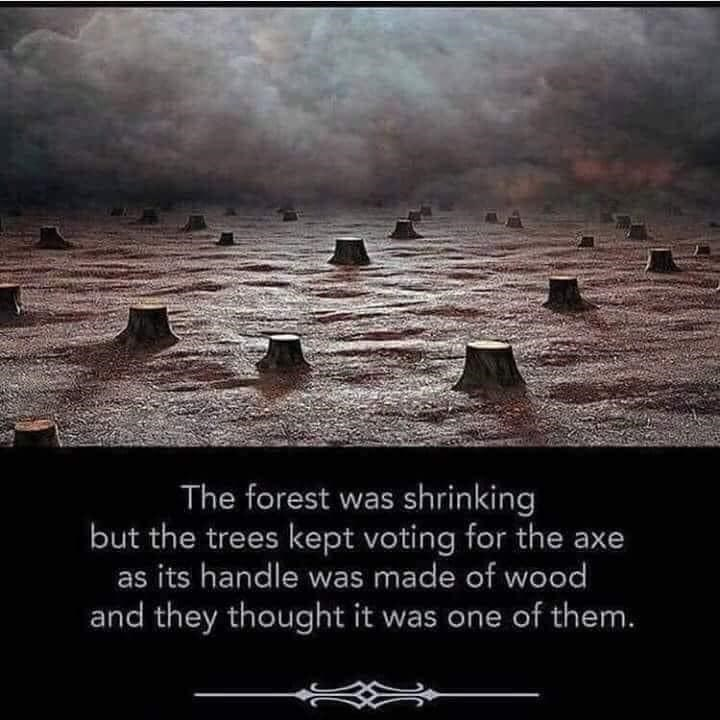 Sky - The forest was shrinking but the trees kept voting for the axe as its handle was made of wood and they thought it was one of them.