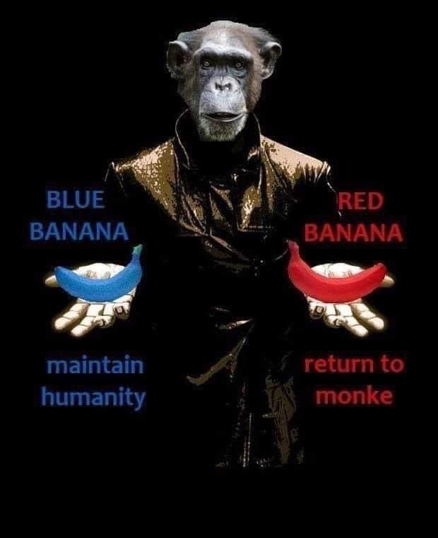 Poster - BLUE RED BANANA BANANA maintain return to humanity monke