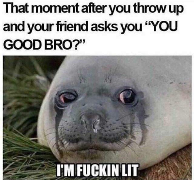 """Seal - That moment after you throw up and your friend asks you """"YOU GOOD BRO?"""" I'M FUCKIN LIT"""