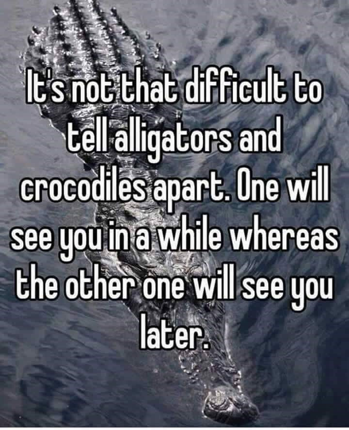 Text - ts not that difficult to tell alligators and crocodiles apart. One wll see you in a while whereas the other one will see you later.