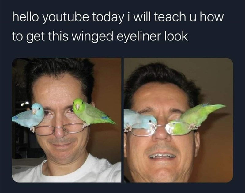 Funny meme about makeup tutorial, winged eyeliner, bird joke, bird meme, birds on glasses, youtube | hello youtube today i will teach u how to get this winged eyeliner look