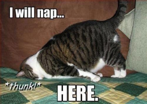 cat memes - 9563886080
