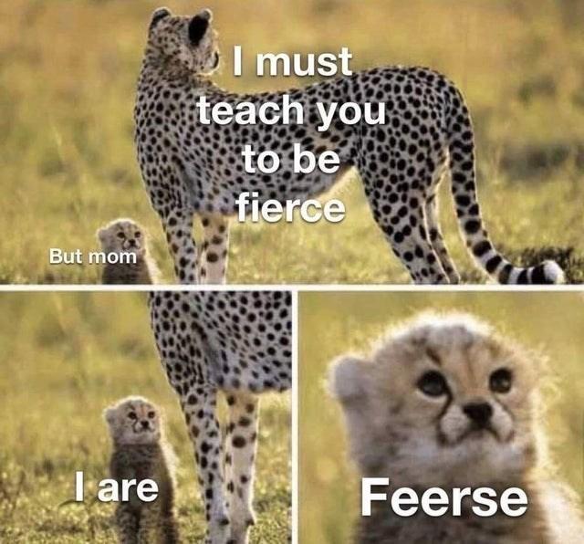 animal memes - 9563886848