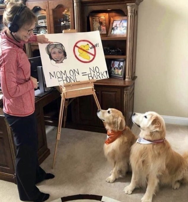 "photo of a woman showing a board to two dogs with a graphic ""mom on phone no bark"""