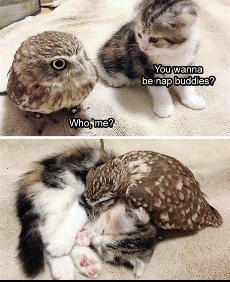 animal memes cat memes - 9563889408