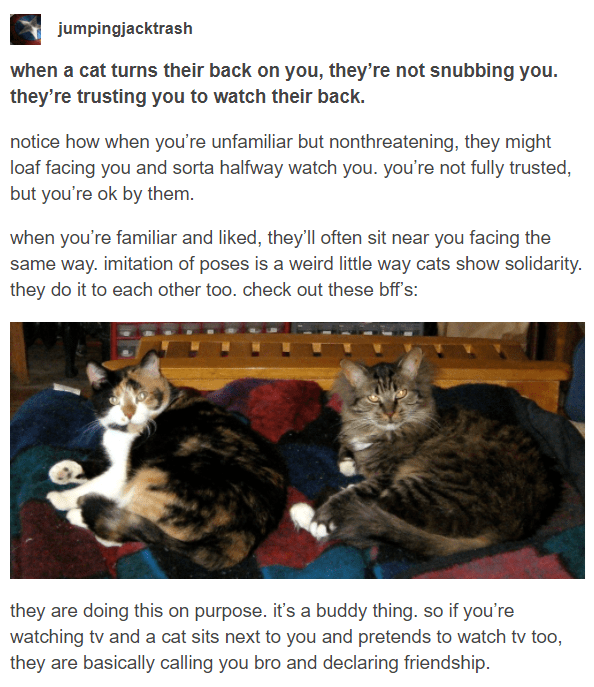 Cat - jumpingjacktrash when a cat turns their back on you, they're not snubbing you. they're trusting you to watch their back. notice how when you're unfamiliar but nonthreatening, they might loaf facing you and sorta halfway watch you. you're not fully trusted, but you're ok by them. when you're familiar and liked, they'll often sit near you facing the same way. imitation of poses is a weird little way cats show solidarity. they do it to each other too. check out these bff's: they are doing thi