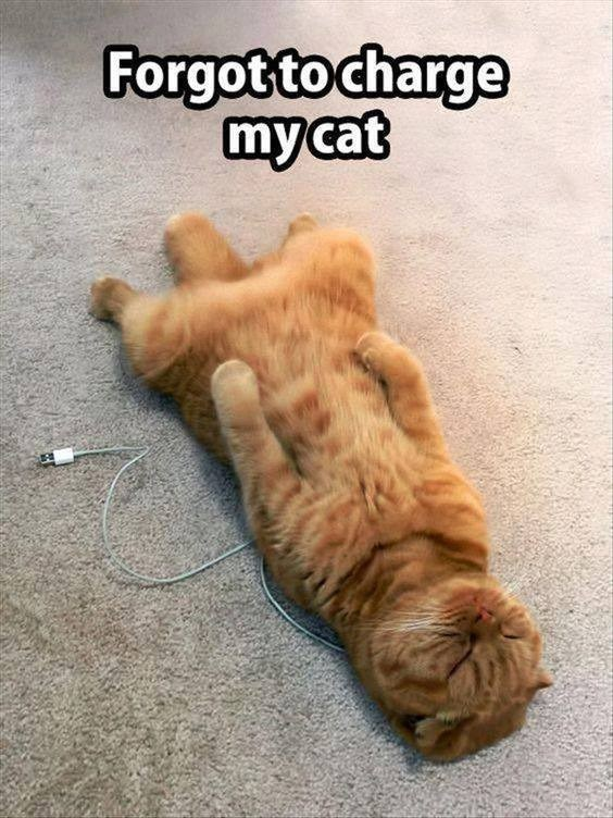Forgot to charge my cat funny orange cat lying on its back on top of an electric cable