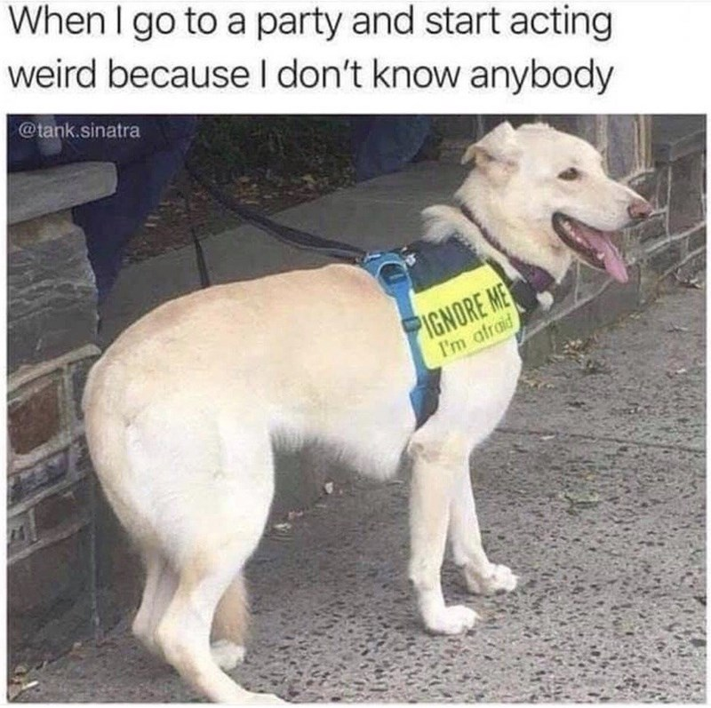 When I go to a party and start acting weird because I don't know anybody @tank.sjnatra cute dog wearing a vest that reads ignore me i'm afraid