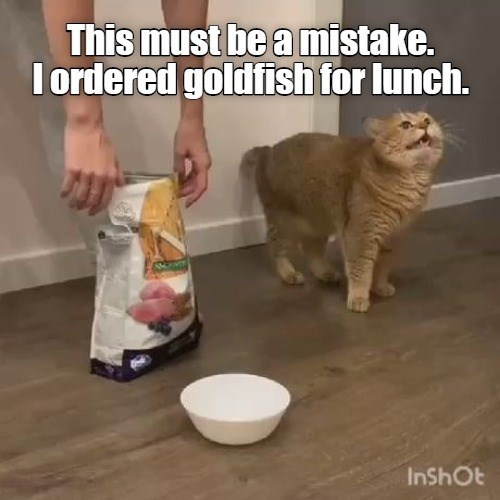 This must be a mistake. I ordered goldfish for lunch. orange cat looking mad next to a bowl and a bag of cat food