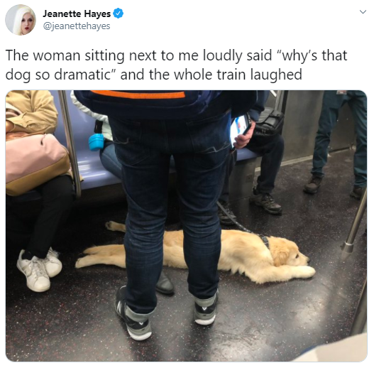 """Photo caption - Jeanette Hayes @jeanettehayes The woman sitting next to me loudly said """"why's that dog so dramatic"""" and the whole train laughed"""
