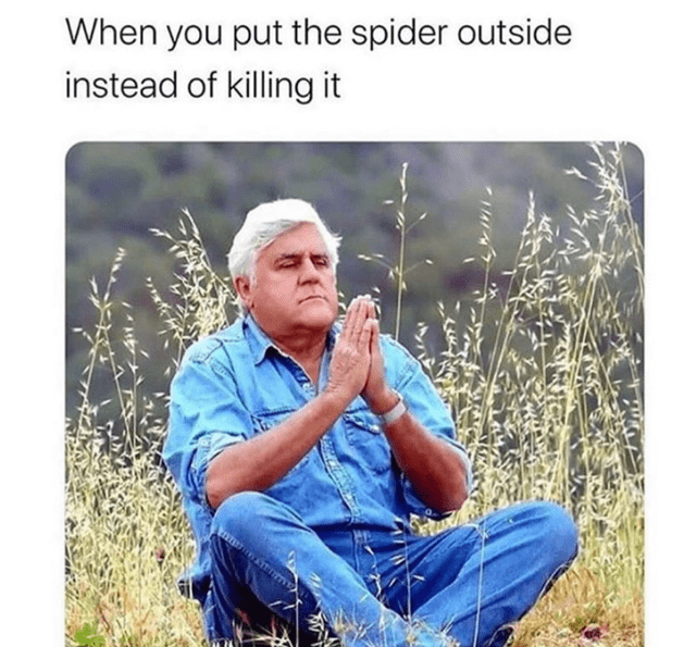 Text - When you put the spider outside instead of killing it