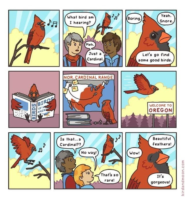 Comics - What bird am Yeah. Boring. I hearing? Snore. Meh. Just a Cardinal. Let's go find some good birds. NOR.CARDINAL RANGE BIRDS OF ME AMER WELCOME TO OREGON Is that...a Cardinal?? Beautiful feathers! No way! Wow! That's so It's rare! gorgeous! BIRDS woJ'uoowpuepaig