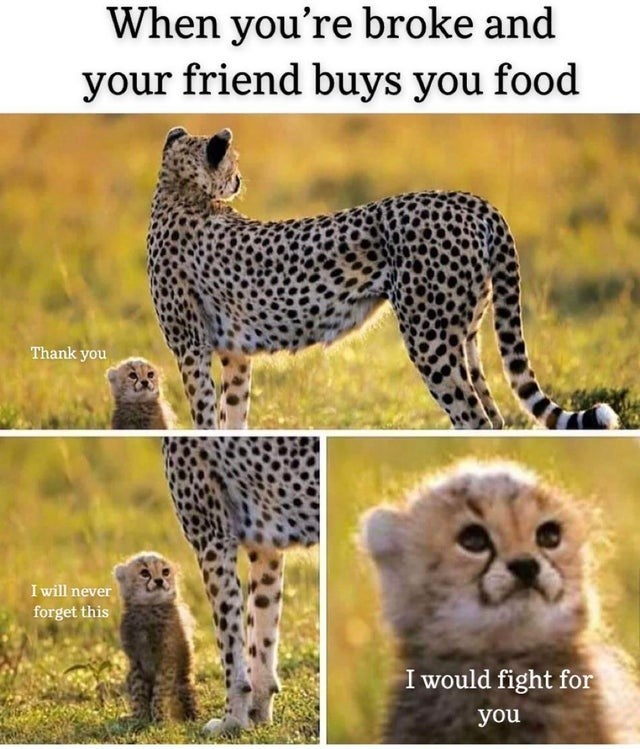 Terrestrial animal - When you're broke and your friend buys you food Thank you I will never forget this I would fight for you