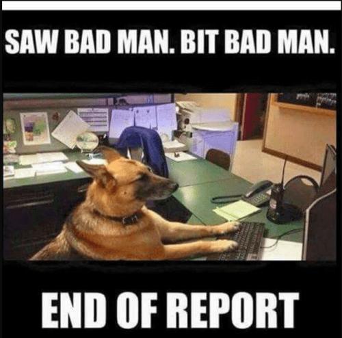 German shepherd dog - SAW BAD MAN. BIT BAD MAN. END OF REPORT