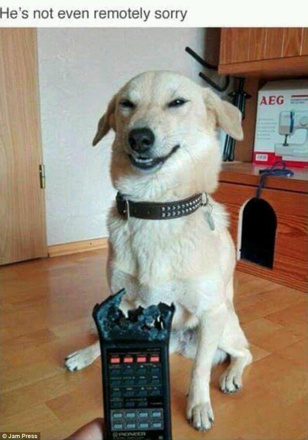 Dog - He's not even remotely sorry AEG O Jam Press GPONEER