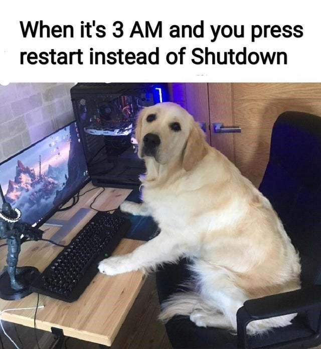 Dog - When it's 3 AM and you press restart instead of Shutdown