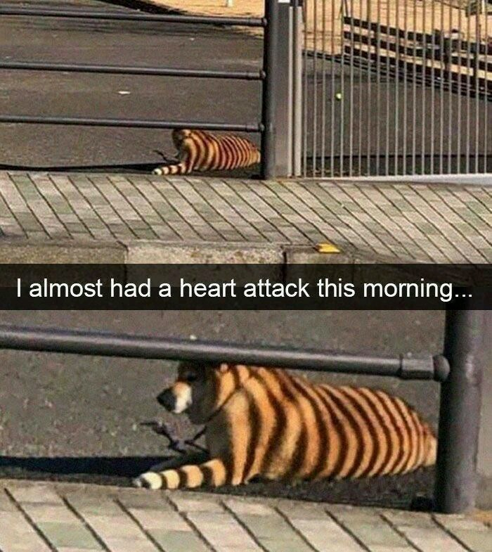 Bengal tiger - I almost had a heart attack this morning...