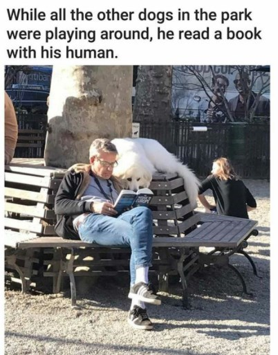 Furniture - While all the other dogs in the park were playing around, he read a book with his human. itibar