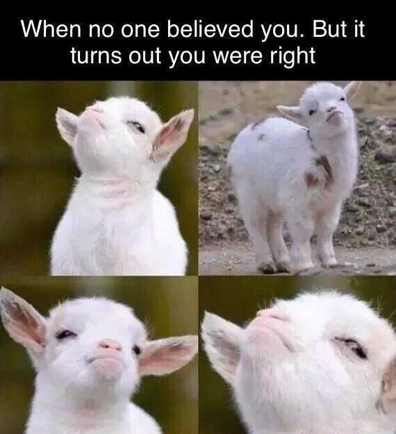 Goats - When no one believed you. But it turns out you were right