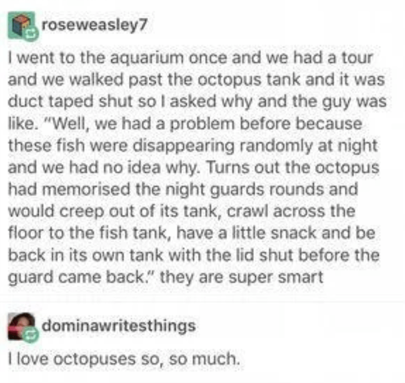 """Text - roseweasley7 I went to the aquarium once and we had a tour and we walked past the octopus tank and it was duct taped shut so I asked why and the guy was like. """"Well, we had a problem before because these fish were disappearing randomly at night and we had no idea why. Turns out the octopus had memorised the night guards rounds and would creep out of its tank, crawl across the floor to the fish tank, have a little snack and be back in its own tank with the lid shut before the guard came ba"""