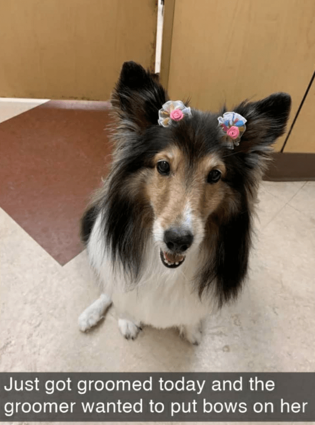 Dog - Just got groomed today and the groomer wanted to put bows on her