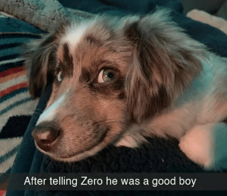 Dog - After telling Zero he was a good boy