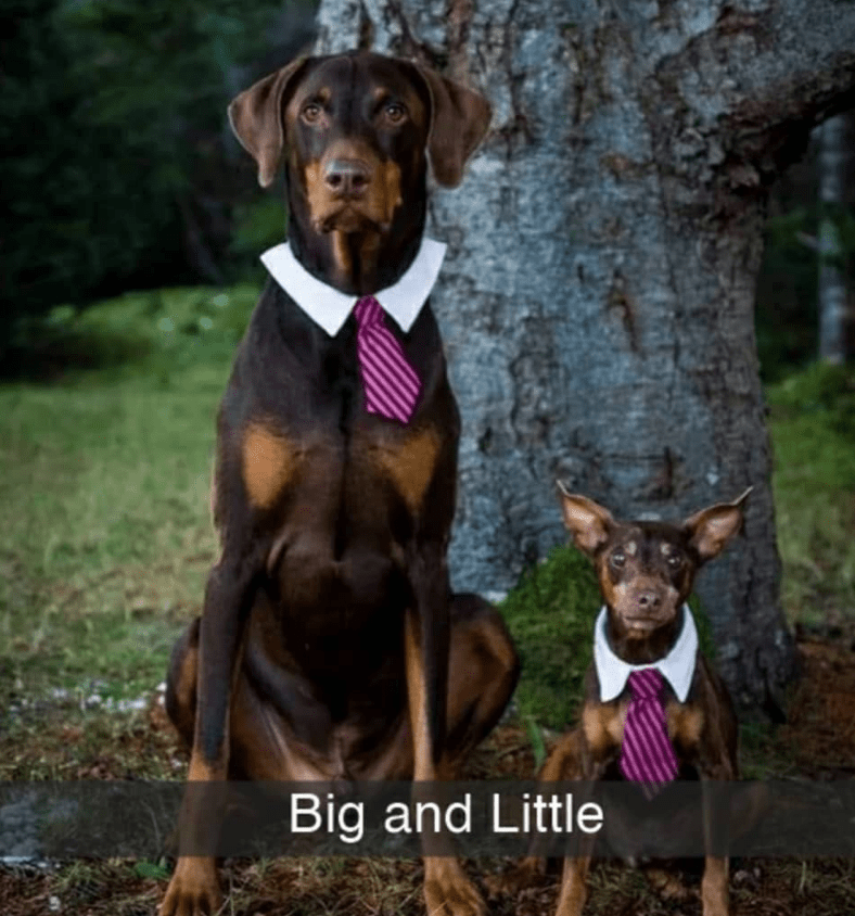 Dog - Big and Little