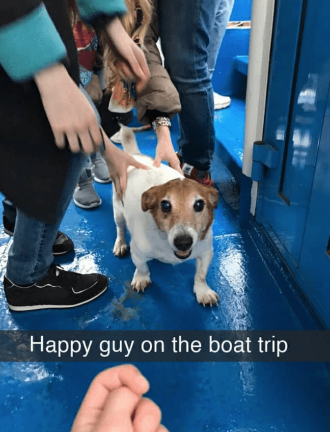 Dog breed - Happy guy on the boat trip 99