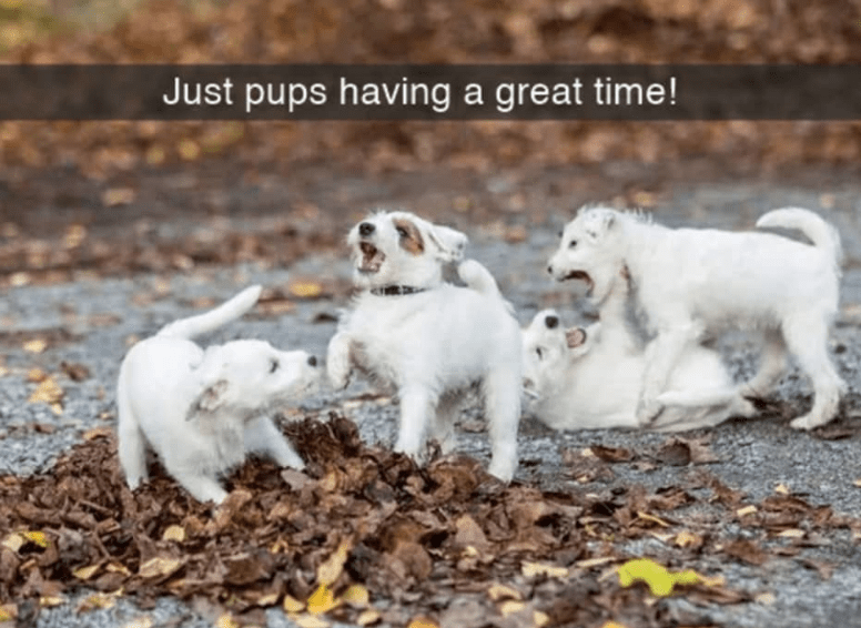 Vertebrate - Just pups having a great time!