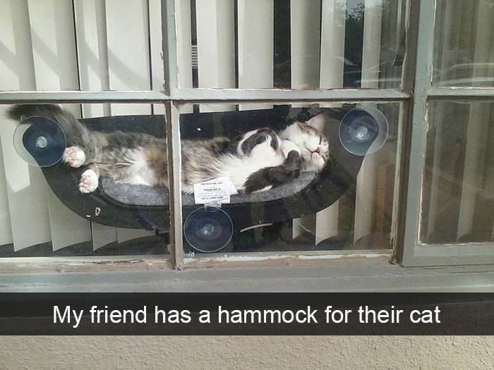 My friend has a hammock for their cat sweet fluffy cat sleeping in a cozy hamock