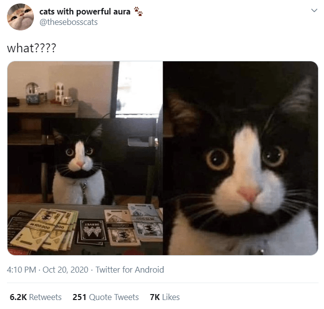 Cat - cats with powerful aura ** @thesebosscats what???? GOO boo 4:10 PM · Oct 20, 2020 · Twitter for Android 6.2K Retweets 251 Quote Tweets 7K Likes >