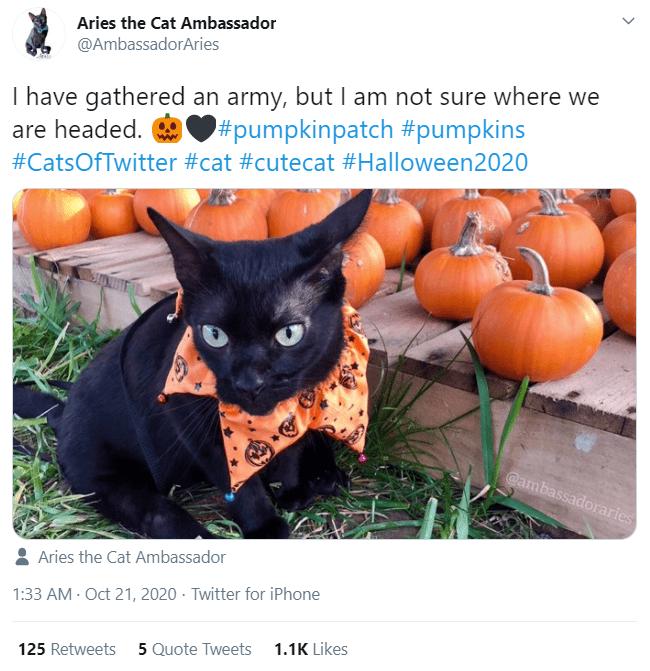Black cat - Aries the Cat Ambassador @AmbassadorAries I have gathered an army, but I am not sure where we #pumpkinpatch #pumpkins are headed. #CatsOfTwitter #cat #cutecat #Halloween2020 @ambassadoraries Aries the Cat Ambassador 1:33 AM - Oct 21, 2020 · Twitter for iPhone 125 Retweets 5 Quote Tweets 1.1K Likes >