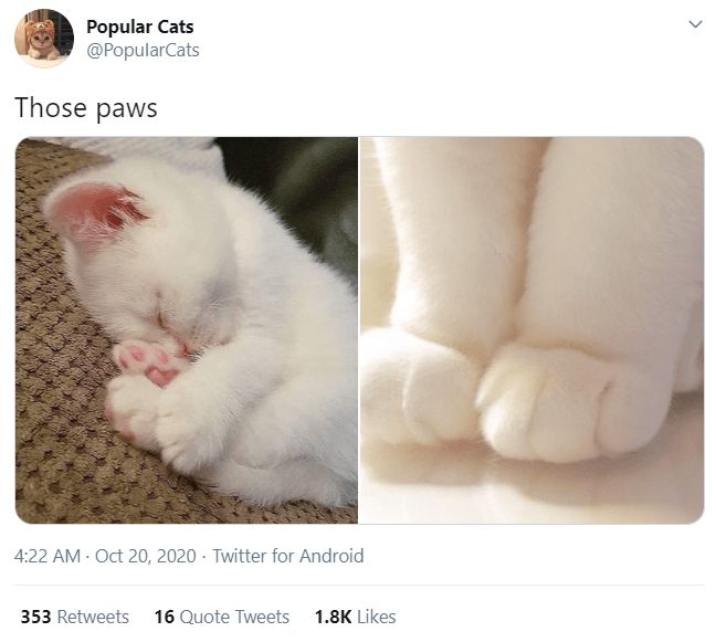 Cat - Popular Cats @PopularCats Those paws 4:22 AM - Oct 20, 2020 · Twitter for Android 353 Retweets 16 Quote Tweets 1.8K Likes >