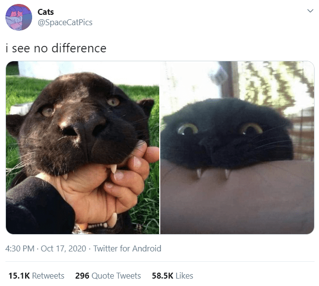 Nose - Cats @SpaceCatPics i see no difference 4:30 PM - Oct 17, 2020 · Twitter for Android 15.1K Retweets 296 Quote Tweets 58.5K Likes >