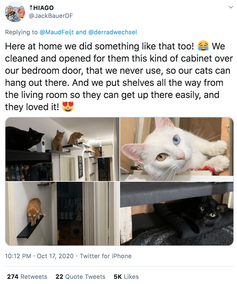 Cat - THIAGO @JackBauerDF Replying to @MaudFeijt and @derradwechsel Here at home we did something like that too! e We cleaned and opened for them this kind of cabinet over our bedroom door, that we never use, so our cats can hang out there. And we put shelves all the way from the living room so they can get up there easily, and they loved it! 10:12 PM · Oct 17, 2020 · Twitter for iPhone 274 Retweets 22 Quote Tweets 5K Likes