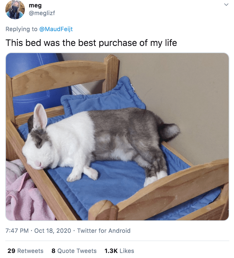 Domestic rabbit - meg @meglizf Replying to @MaudFeijt This bed was the best purchase of my life 7:47 PM · Oct 18, 2020 · Twitter for Android 29 Retweets 8 Quote Tweets 1.3K Likes