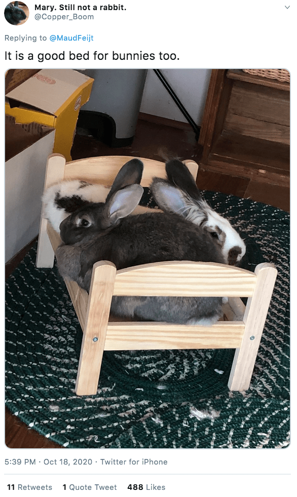 Furniture - Mary. Still not a rabbit. @Copper_Boom Replying to @MaudFeijt It is a good bed for bunnies too. 5:39 PM · Oct 18, 2020 · Twitter for iPhone 11 Retweets 1 Quote Tweet 488 Likes