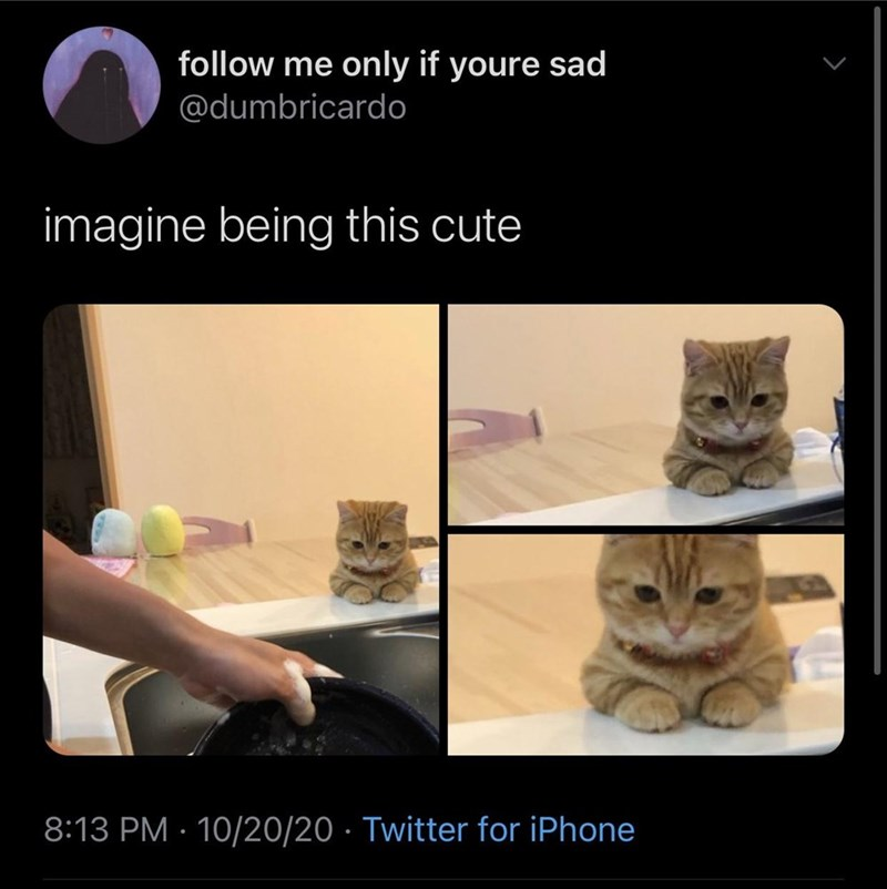 Cat - follow me only if youre sad @dumbricardo imagine being this cute 8:13 PM · 10/20/20 · Twitter for iPhone